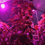 Фитоосвещение для рассады, домашних растений и теплиц